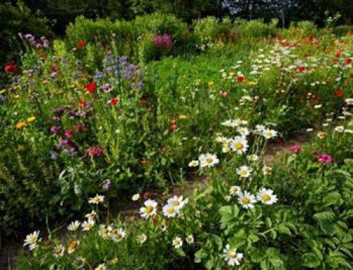 Hessen: Insektenfreundliche Gärten erhalten biologische Vielfalt