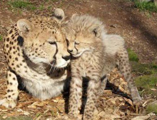 Landau: Zooführung zum Valentinstag mit kleinem Sektempfang