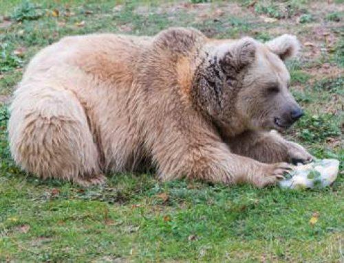 Heidelberg: Zooschule bringt Abwechslung in die Winterferien