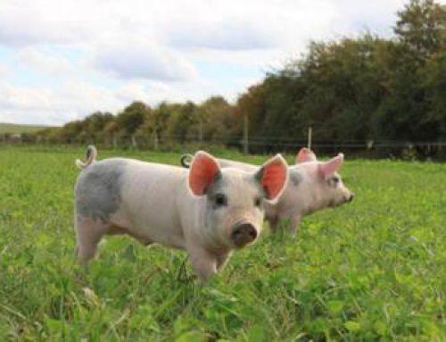 """Hessen: """"Wir brauchen ein aussagekräftiges Tierwohllabel"""""""