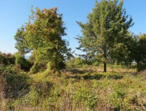 Aktiv die Umwelt schützen mit der Aktion Südpfalz-Biotope