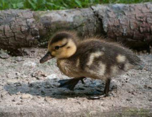 Heidelberg: Osterspaß zum Mitmachen in der Zooschule