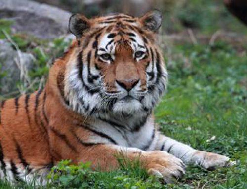 Landau: Öffentliche Zooführung mit Tierärztin Henrike Gregersen