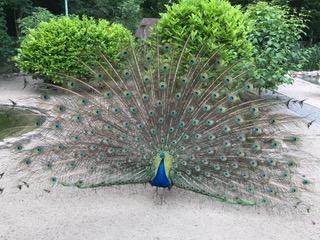 Vogelpark Heddesheim