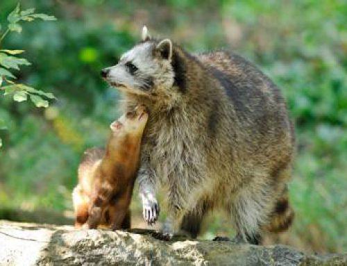 Neu in ecoGuide: Eine Karte mit Tierparks!