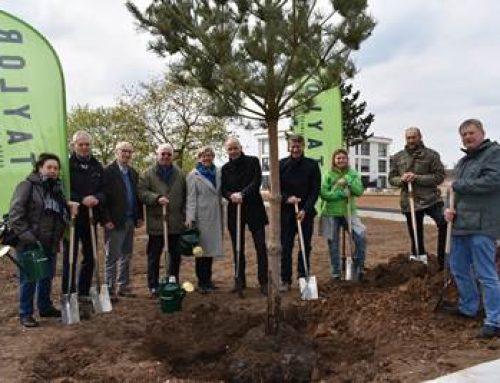 Mannheim: 700. Baum auf dem Taylor-Areal gepflanzt
