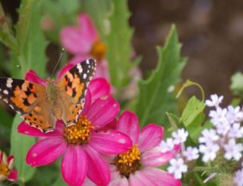 Baden-Württemberg: DGV und BWGV engagieren sich für Biodiversität