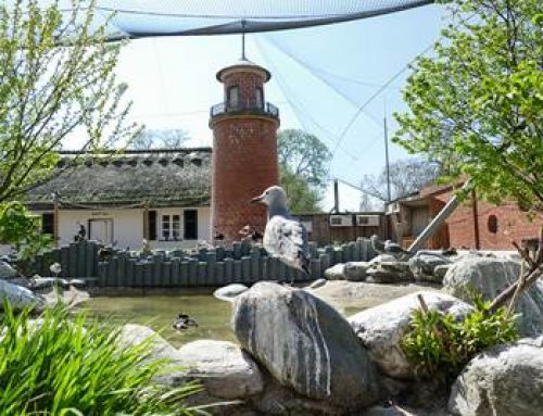Frühlingstage im Zoo Heidelberg genießen