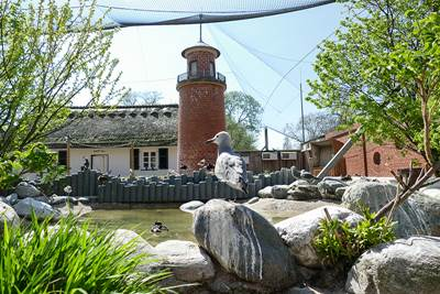 Zoo Heidelberg Küstenpanorama