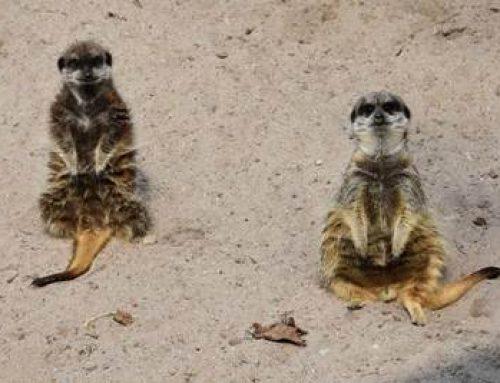 """""""Tiere erleben im Landauer Zoo"""" – Forum Demenz lädt zu gemeinsamer Entdeckungsreise"""