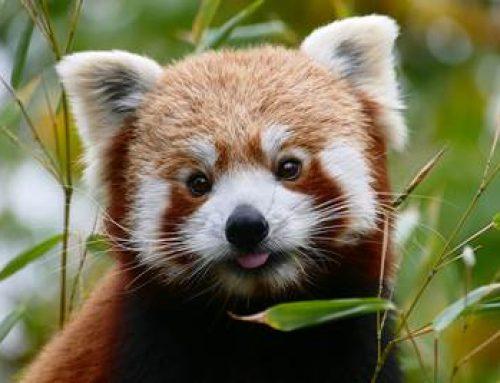 Heidelberg: Zoo unterstützt Artenschützer mit wichtigen Infos