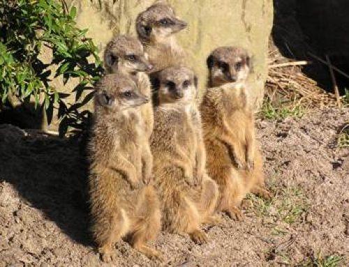 Landau: Erlebnis-Abenteuer-Camp für Kinder im Zoo