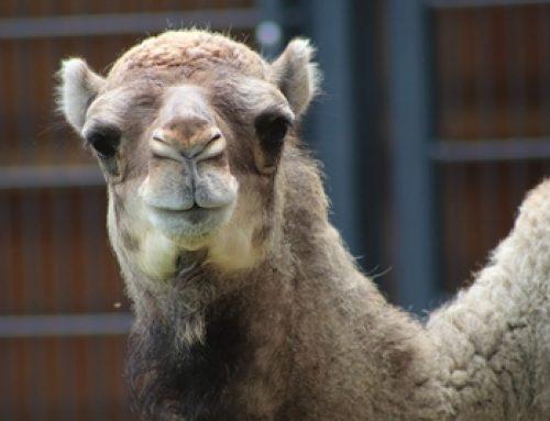 Landau: Abendliche Zooführung für die ganze Familie