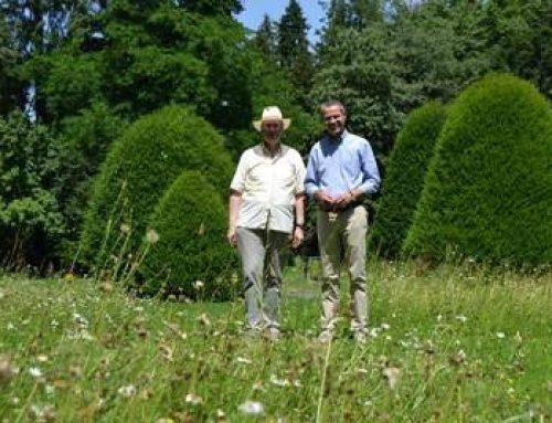 Landau: Stadt schafft Blühinseln für Bienen, Schmetterlinge und Co.
