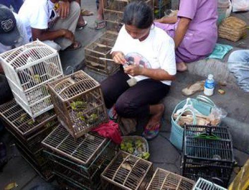 Singvogelsterben in Südostasien – Vogelpark Viernheim sammelt alte Ferngläser