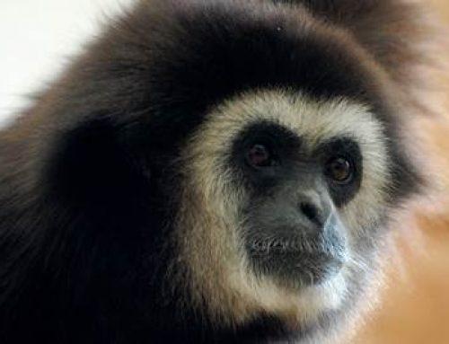 Landau: Großes Sommerfest im Zoo am 18. August