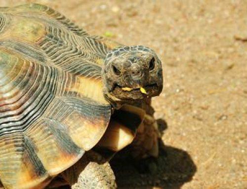 Landau: Schildkröten-Workshop der DGHT-Regionalgruppe Kurpfalz und des Zoos