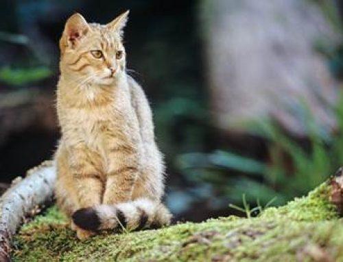 BUND fordert mehr Anstrengungen für den Waldverbund und naturnahe Wälder