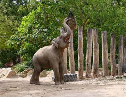 Heidelberg: Wie beschäftigt man Zootiere? – Workshop für Erwachsene