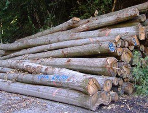 Rhein-Neckar-Kreis: Brennholz weiterhin stark nachgefragt