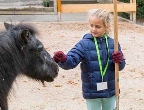 Heidelberg: Die Herbstferien zwischen Tieren verbringen