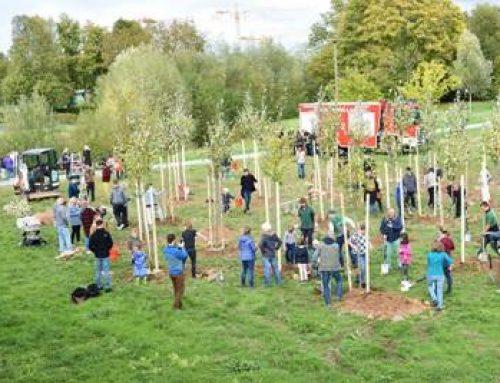 Aktion #Einheitsbuddeln in Landau: Rund 50 Teilnehmer pflanzten Bäume