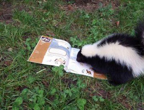 Heidelberg: Vorlesetag im Zoo