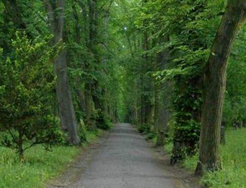 Heidelberg: Stadt bittet um Vorsicht beim Waldbesuch