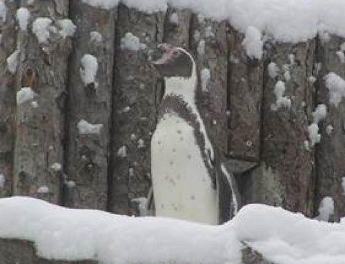 """Zoo Landau: Familienführung zum Thema """"Zootiere im Winter"""""""