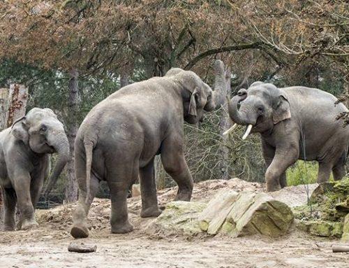 Zoo Heidelberg startet mit spannenden Projekten & Terminen in 2020