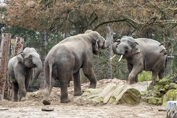 Elefanten Zoo Heidelberg