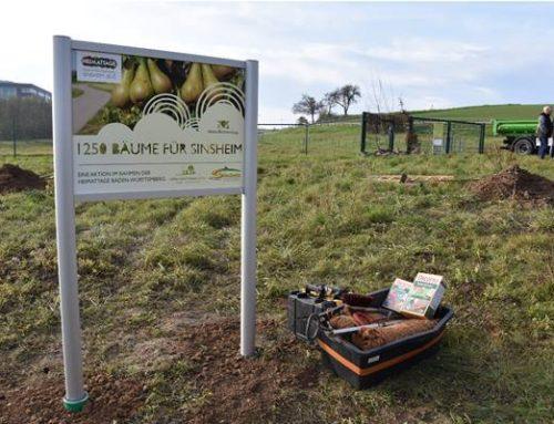 1.250 Bäume für Sinsheim: Aktion beendet