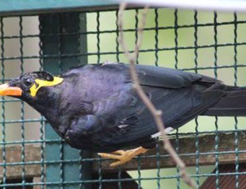 """""""Zootier des Jahres"""" auch im Vogelpark Viernheim"""