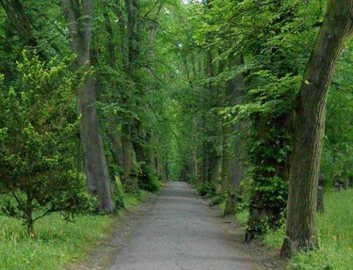 Ludwigshafen: Waldbaden im Maudacher Bruch