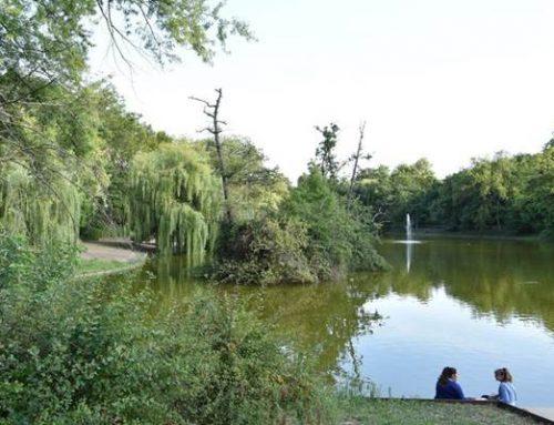 Landau: Neugestaltung des Ostparks und Sanierung des Schwanenweihers