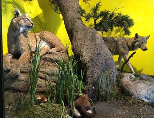 Zoo Landau: Einheimische Beutegreifer stehen am 22. März im Fokus