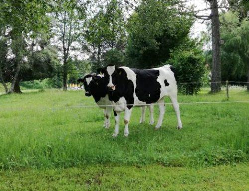 Hessen: Über 42 Millionen Euro für umweltgerechte Bewirtschaftung