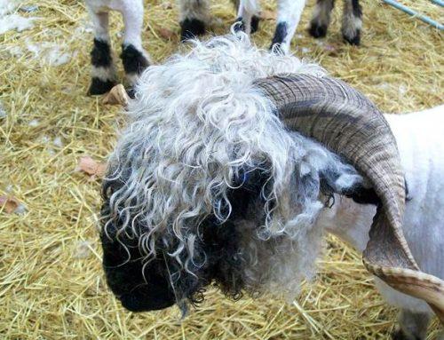 Hessen: Ehrenamtlicher Natur- und Tierschutz wird während der Krise unterstützt