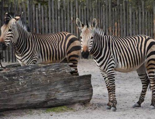 In Krisenzeiten Freundschaften schließen: Zoo Landau sucht Tierpaten