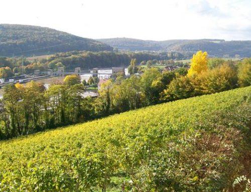 Klimawandel verändert Baden-Württemberg