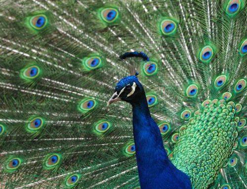 Behutsame Wiedereröffnung des Vogelpark Viernheim