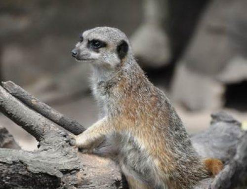 Sommerferienangebot der Zooschule Landau