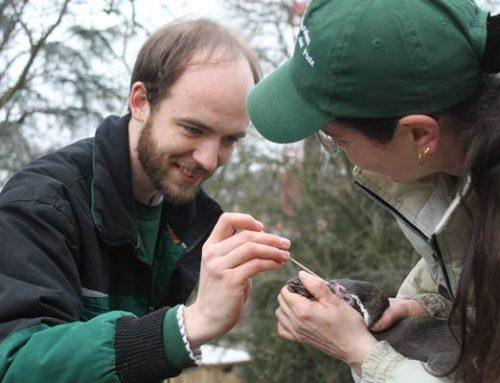 Zoo Landau: Anteil an mehr als 1.000 Studien in VdZ-Zoos