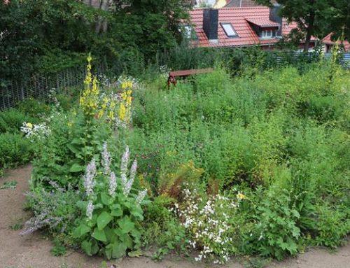 Weinheim: 25 Jahre Heilpflanzengarten im Schlosspark