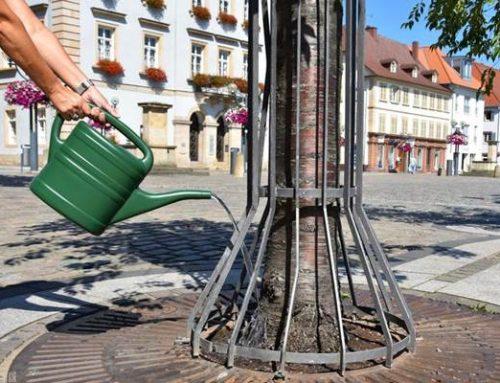Stadt Landau freut sich über Mithilfe beim Gießen von Stadtbäumen