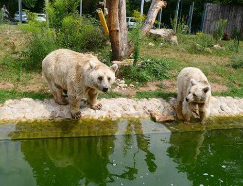 Mit Online-Ticket in den Zoo Heidelberg