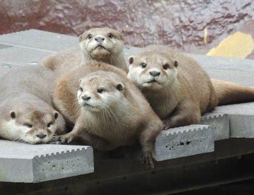 Zooschule Landau öffnet wieder für Schulen und Kindergärten