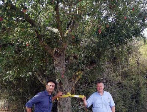 Bensheim: An markierten Obstbäumen darf geerntet werden
