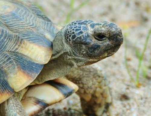 Landau: DGHT-Schildkröten-Stammtisch am 30. September