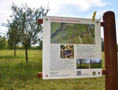 Stadt Landau gibt zwei Streuobstwiesen zum Selbstpflücken frei